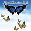 1er album Les Ailes Au Nord